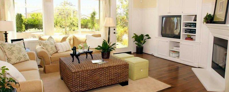 گیاهان آپارتمانی